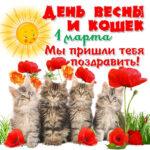Открытки 1 марта весна день кошек