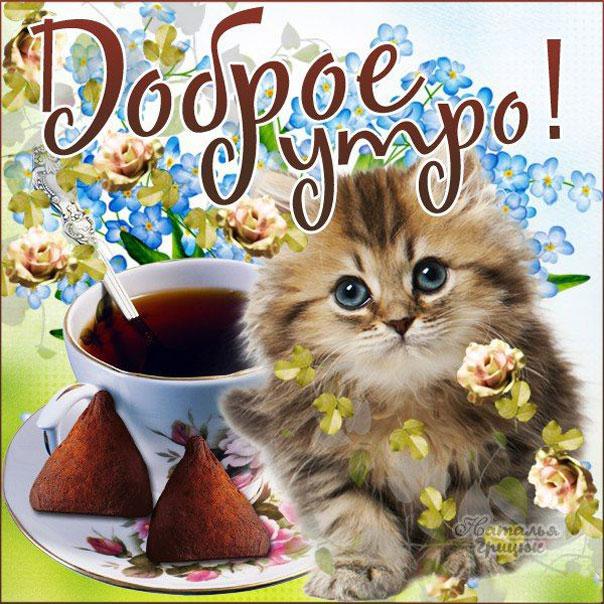 доброе утро и хорошее настроение картинки от кота эту программу свой