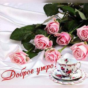 Картинки утро розы